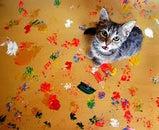 best electronic cat repeller