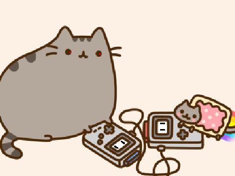 snowshoe cat cost