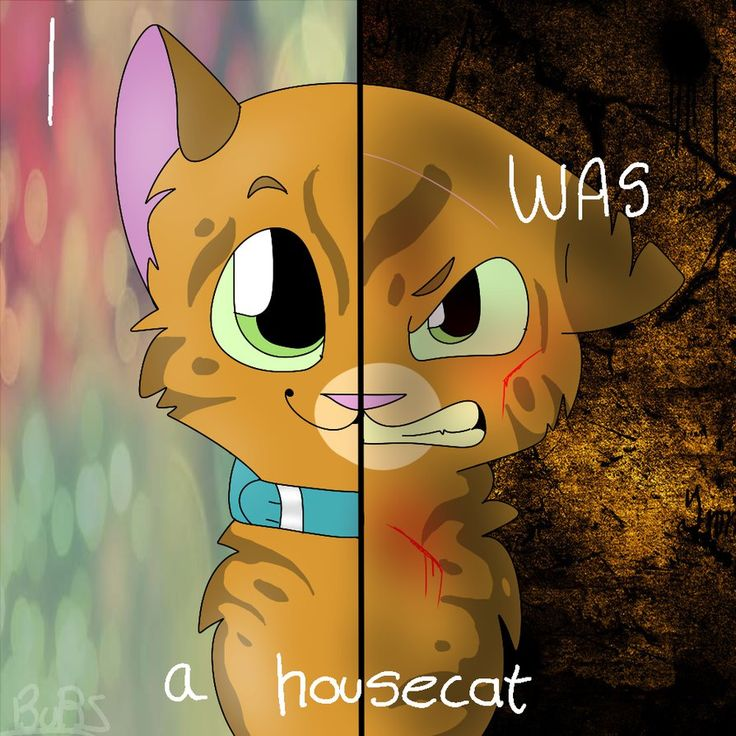 Warrior Cats Adventure Game Chapter 1 On Scratch